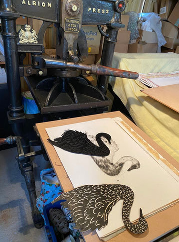 Swans being hand-printed using an ancient Albion Press